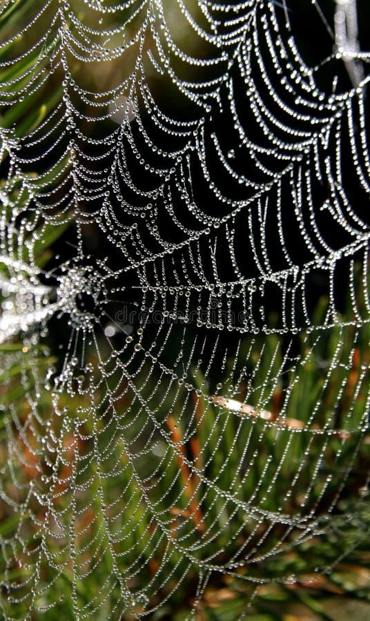 Ragno-Web fotografia stock libera da diritti