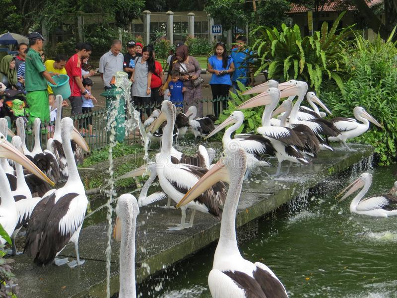 Ragunan zoo, Dżakarta zdjęcie royalty free
