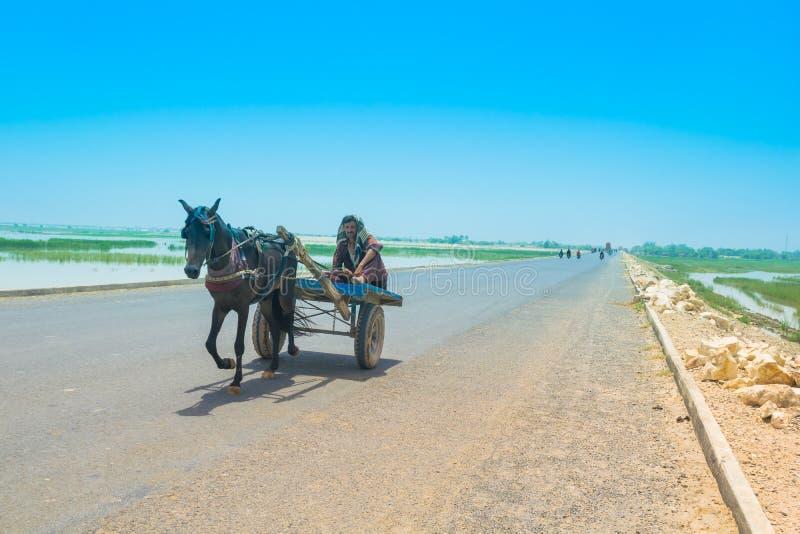 Rahim khan yar, Punjab, Paquistão-junho 23,2019: um aldeão que senta-se em um carro do cavalo em uma maneira alta fotografia de stock