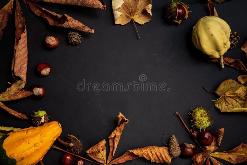 Rahmen aus Blättern, Kastanien, Kürbissen und trockenen Elementen, bunte Herbstdekoration stockbilder