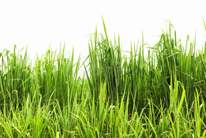 Rahmen des grünen Grases lokalisiert auf weißem Hintergrund stockfotografie