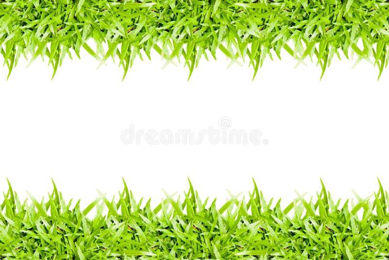 Rahmen des grünen Grases lokalisiert auf weißem Hintergrund lizenzfreies stockfoto