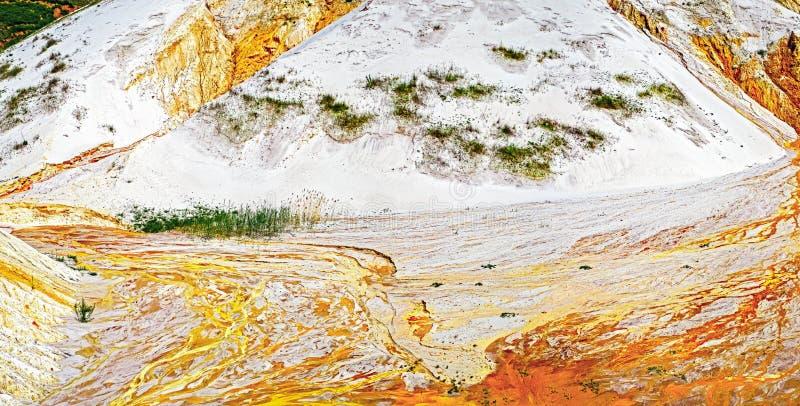 Raia da água na areia dourada fotos de stock