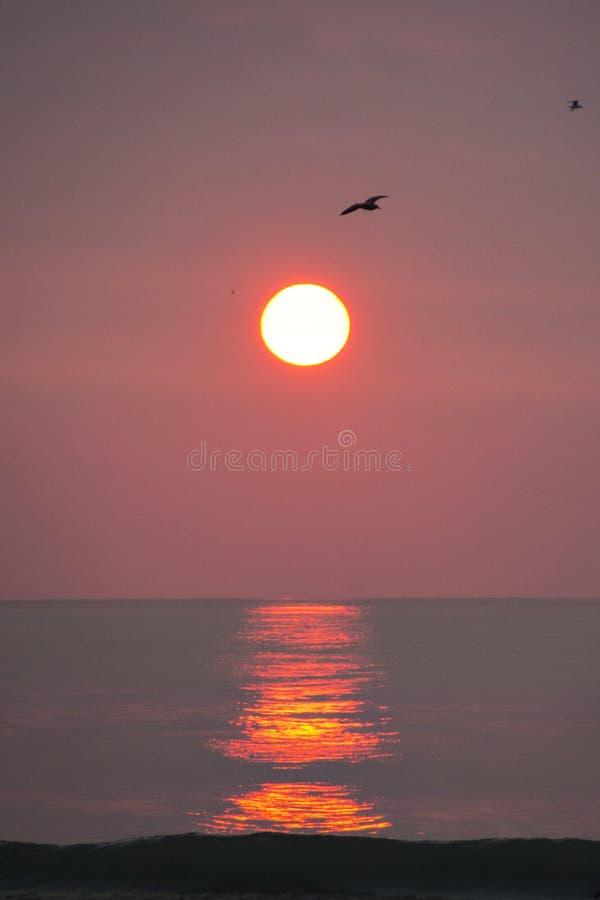 Raia do nascer do sol do rosa quente foto de stock
