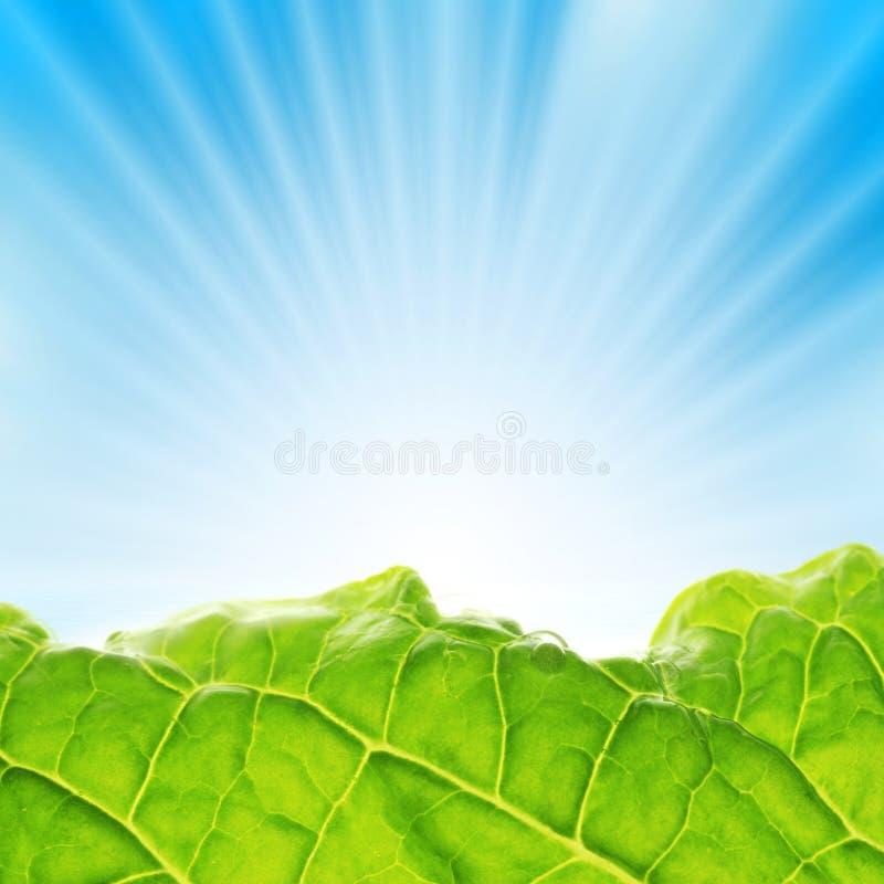 Raias da paisagem da folha do sol foto de stock
