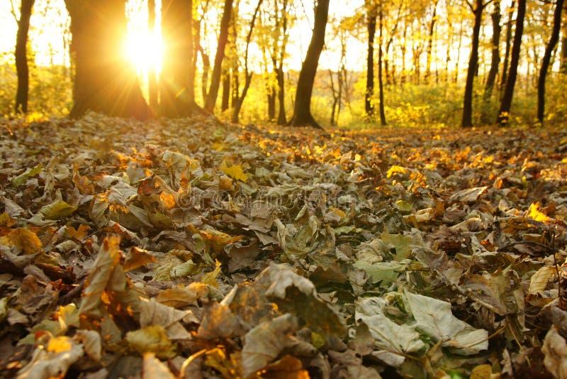 Download Raias de Sun foto de stock. Imagem de scenic, outdoors - 16859838