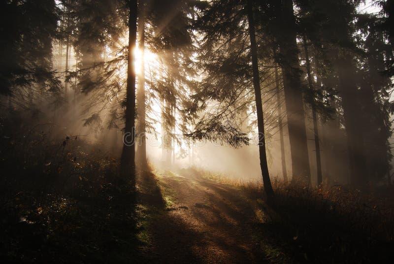 Raias de Sun em uma floresta imagem de stock