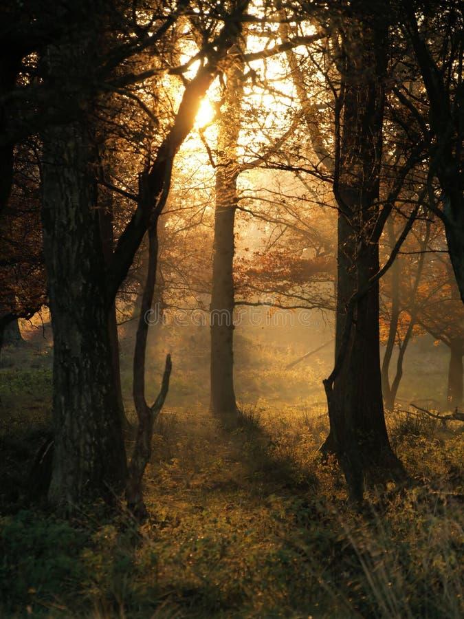 Raias de Sun em uma manhã do outono imagens de stock