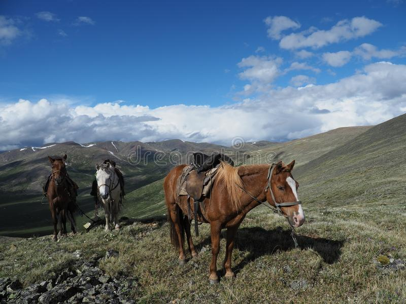 Raiding_horse royalty free stock image