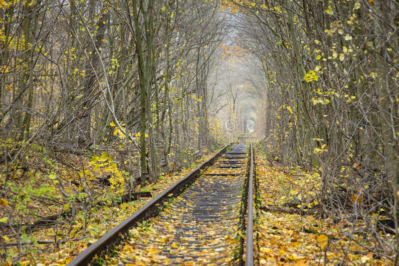 Rail way into autumn forest stock images