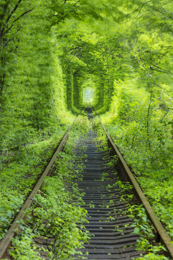 Rail way in green tunnel stock image