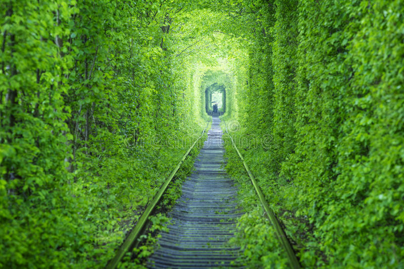Rail way tunnel in forest stock photo