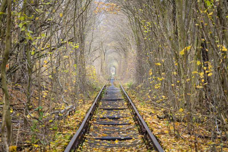 Rail ways rows in forest stock images