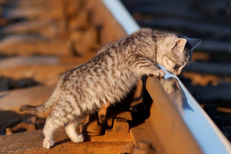 Railcat zdjęcie royalty free
