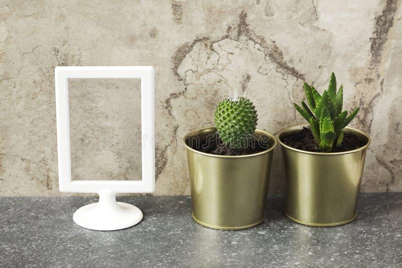 Raillez vers le haut du cadre et le cactus et les plantes succulentes dans des pots photographie stock