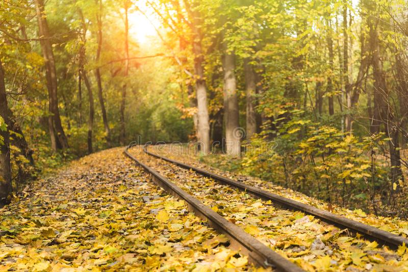 Railroad in autumn forest stock images