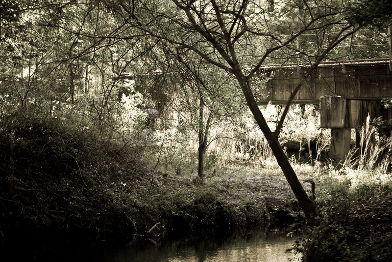 Railroad Bridge In Woods Stock Image