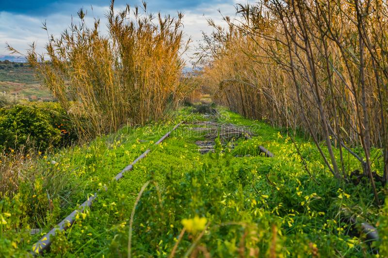 A railroad overgrowns with green grass and Oxalis pes-caprae goat`s-foot and Arundo donax giant cane. A railroad overgrown with green grass and yellow flowers stock images