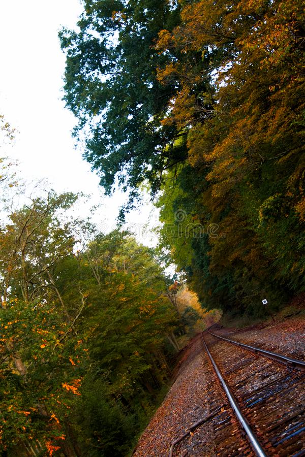 Railroad track through fall woods royalty free stock photography