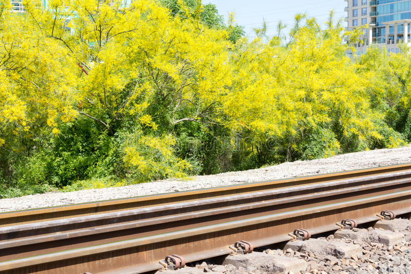 Railroad tracks and bright yellow blooms stock photo