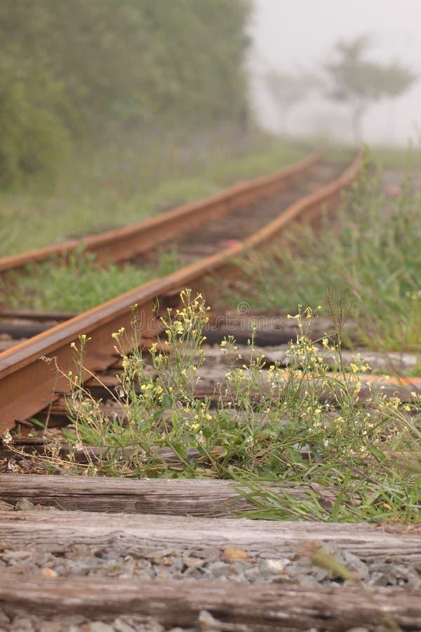 Railroad tracks. Small yellow flowers along the railroad tracks royalty free stock photos