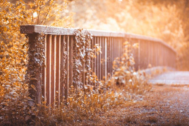 Rails au-dessus du lac, dans la forêt automnale au soleil images stock