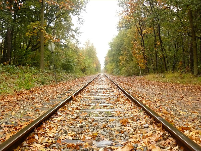 Rails through the forest in Autumn royalty free stock photos
