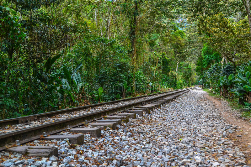 Railway through forest stock photography