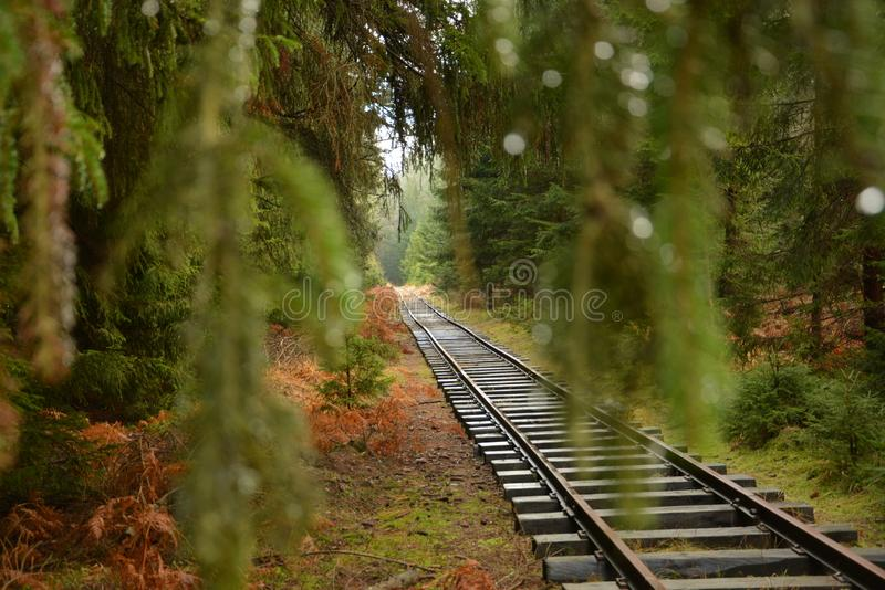 Tracks in the green forest stock photos