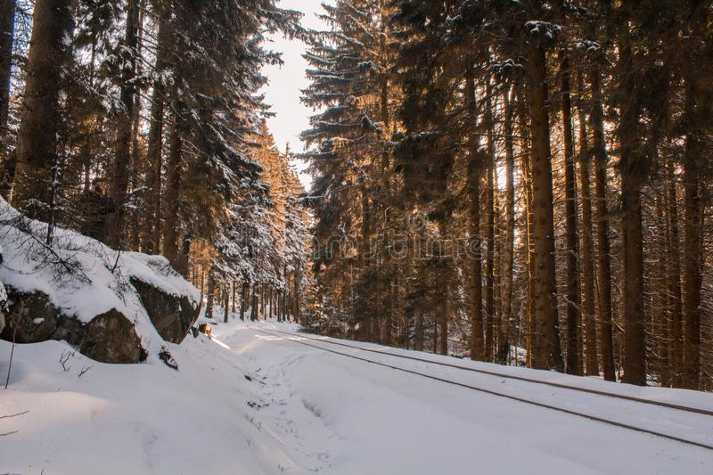 Railway track leading through winter forest landscape, Harz Mountains National Park, Germany stock image