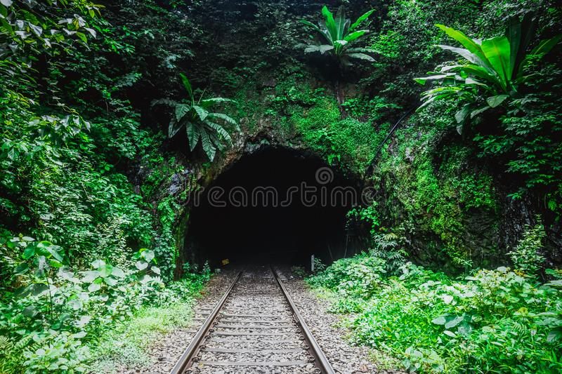 Railway tunnel in the wild jungle. India royalty free stock photos