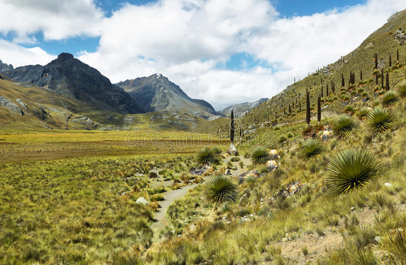 Raimondi Puya, Huascaran, Περού στοκ φωτογραφίες με δικαίωμα ελεύθερης χρήσης