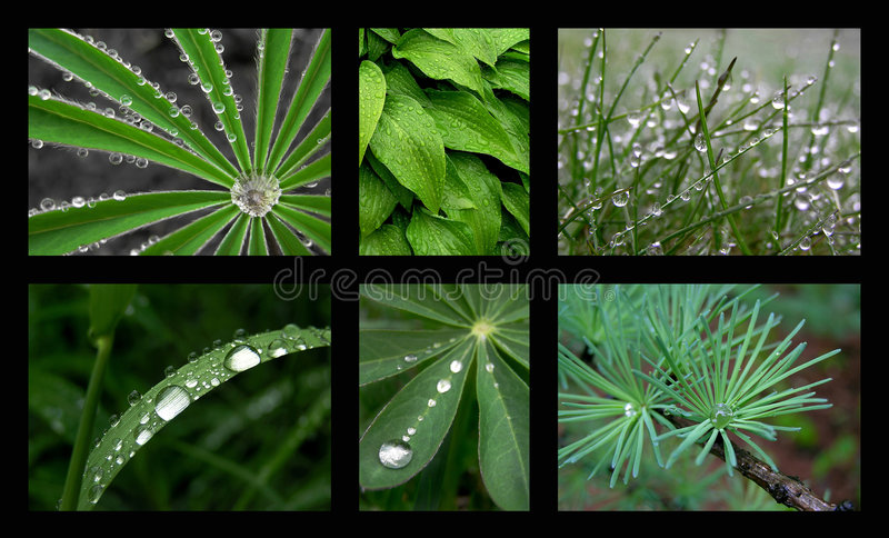 Download Rain stock image. Image of rainy, leaf, raindrops, park - 150287