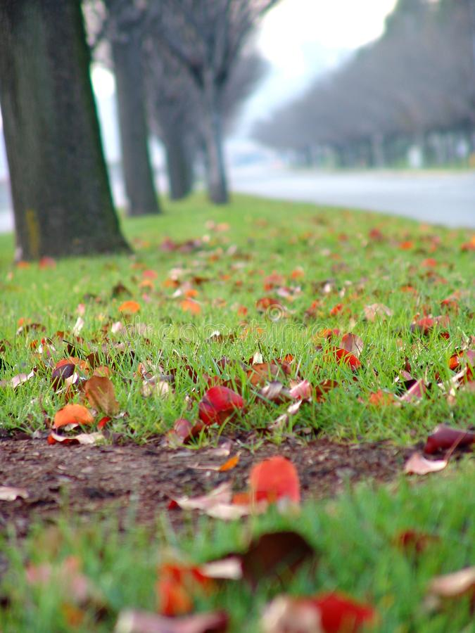 After Rain stock photography