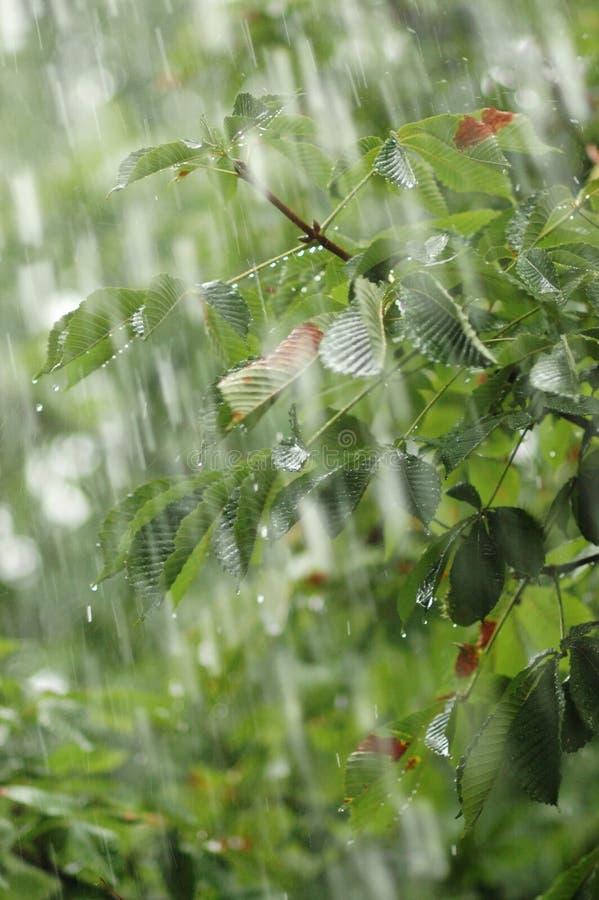 Free Rain. Royalty Free Stock Photos - 4636628