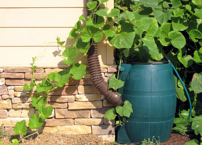Rain Barrel. A rain barrel sits at the bottom of a gutter to collect rain water in order to conserve water and be eco-friendly royalty free stock images