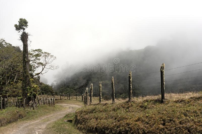 Rain or cloud forest in the Volcan Baru Panama National Park.  stock photography