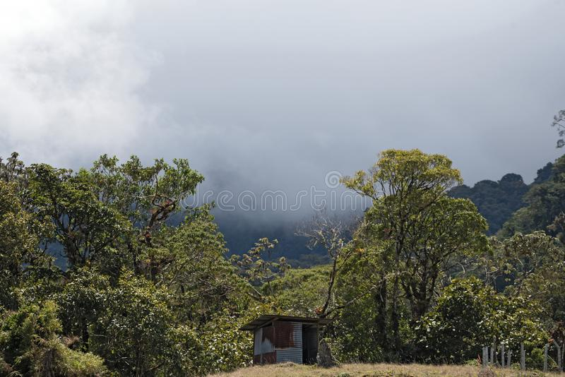 Rain or cloud forest in the Volcan Baru Panama National Park.  stock photos