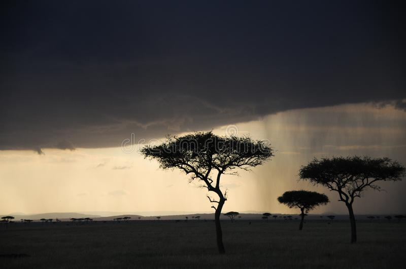 Rain clouds gather at sunset in Tanzania, Africa royalty free stock image