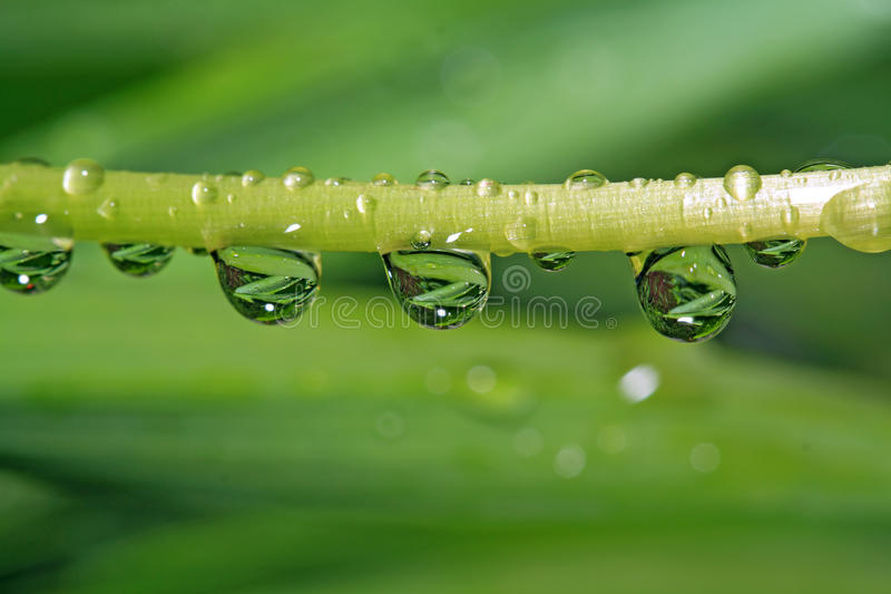 Rain dripped royalty free stock photo