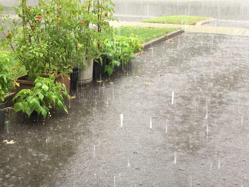 Rain on driveway garden royalty free stock photos