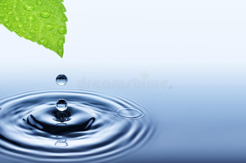 Drop of water falling from green fresh leaf stock images