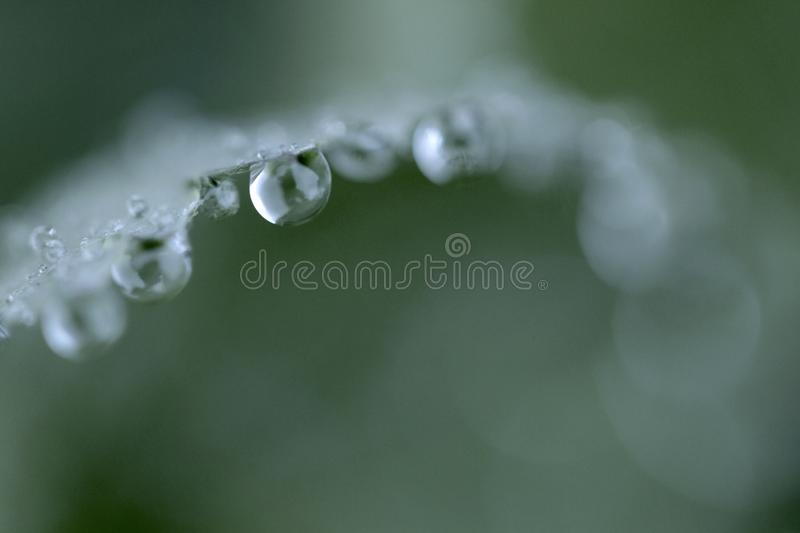 Drop in grass color macro photography stock images