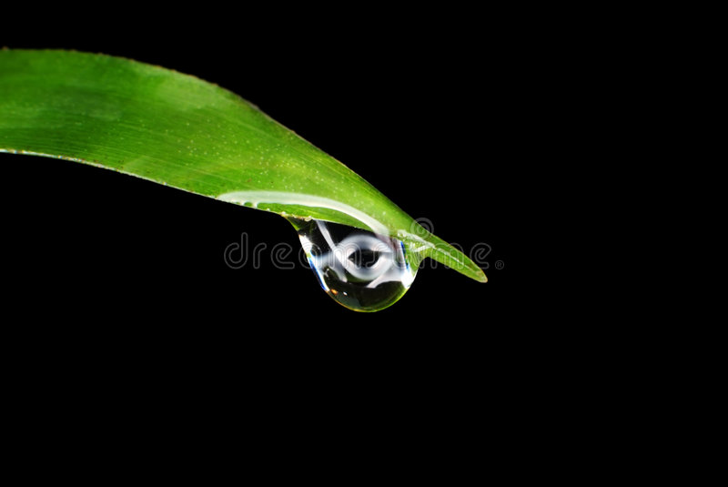 Rain drop on a leaf stock photography