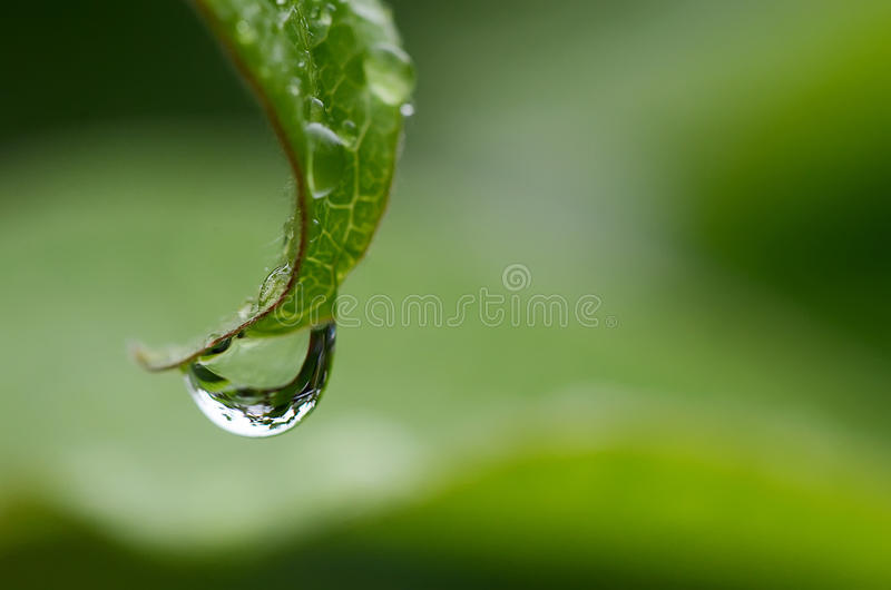 Rain drop on a leaf stock image