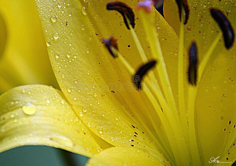 Rain drop nutrients stock image