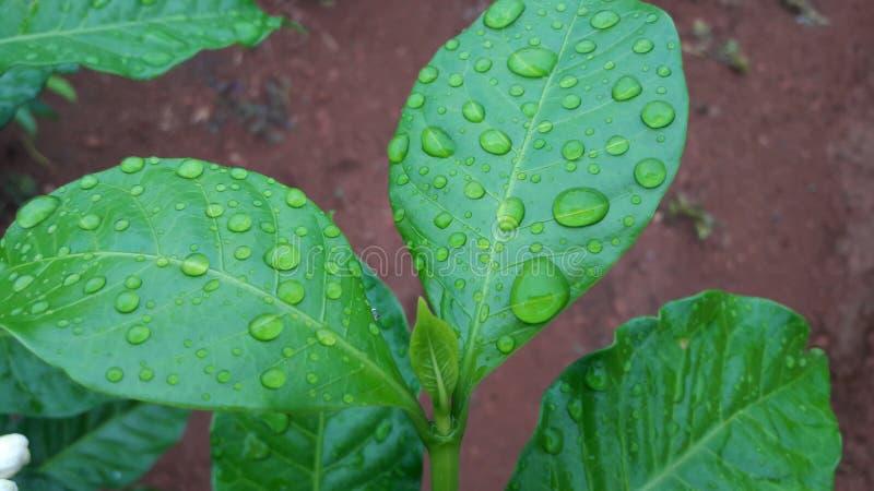 Rain droppe royaltyfri fotografi
