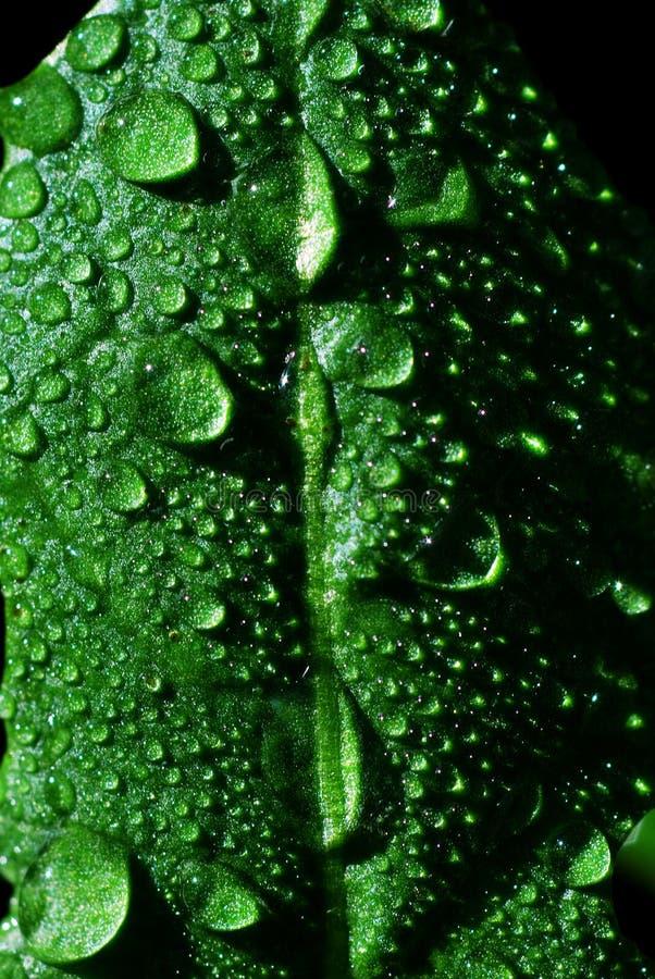 Free Rain Drops Royalty Free Stock Images - 4597599