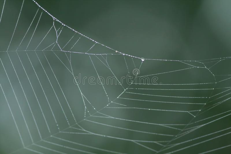 Spider web with rain drops stock photos