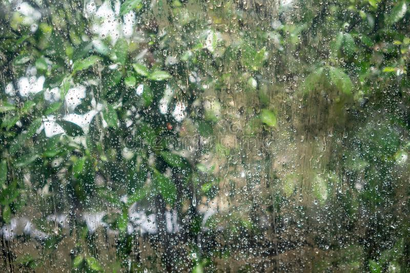 Rain drops on dirty window with green tree in background royalty free stock image